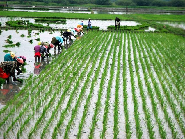 bl25_farmer-planti_1375731f