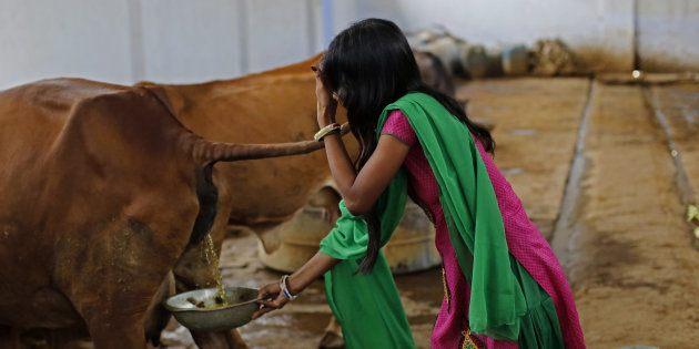 cow-urine